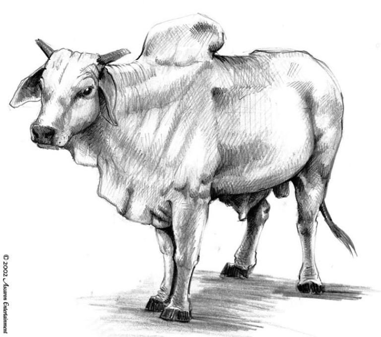 Fauna Kuh