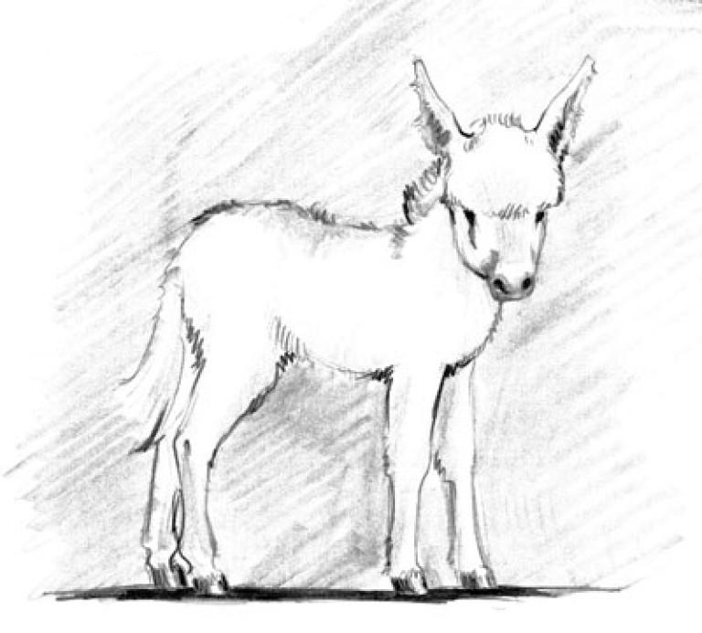 Esel (1)